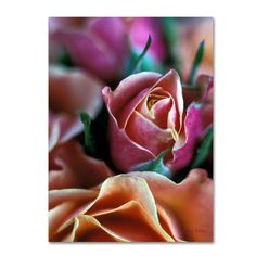 24 in. x 18 in. Mauve and Peach Roses Canvas Art