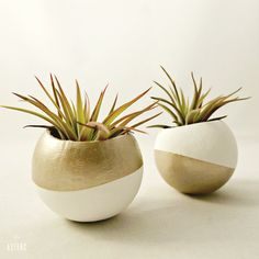 Inverse Air Plant Pod Set // Gold  White with Air by seaandasters, $29.00