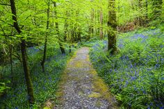 Plas Cadnant, Anglesey, Wales by angleseyattractions