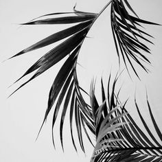 minimal – black and white tropical iphone wallpaper background Source by Hipster Vintage, Style Hipster, Vintage Black, B&w Wallpaper, Wallpaper Backgrounds, Moomin Wallpaper, Wallpaper Plants, Iphone Backgrounds, Iphone Wallpapers