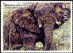 African Elephant (Loxodonta africana) 2014