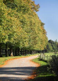 Marbury Country Park, Cheshire - DayTripFinder
