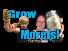 ▶ How to Grow Morel Mushrooms! At HOME! - YouTube