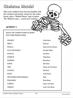 Skeletal System Worksheet Pdf Fresh Skeleton Match Word Matching Page Skeletal System Activities, Skeletal System Worksheet, Human Body Activities, Science Activities, Science Experiments, Science Worksheets, Worksheets For Kids, Kindergarten Worksheets, Printable Worksheets
