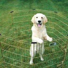 Midwest Dog Playpen Cage