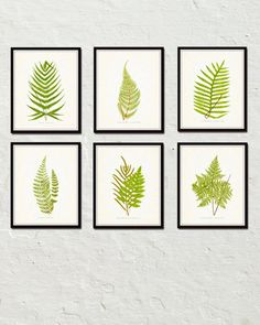 VINTAGE FERNS SET NO.1 GICLEE CANVAS PRINTS  These beautiful vintage fern prints are from a series of Fern illustrations by the noted British