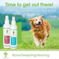 It is definitely that time of year where the bugs come out and your pup starts scratching!  pawtree.com/pawsitivepetsitting