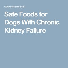 Safe Foods for Dogs With Chronic Kidney Failure
