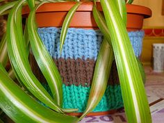 knitting for my plants