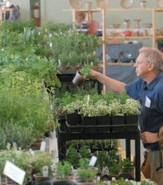 Stock up the home, garden at annual herb festival