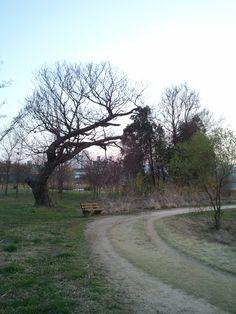 Yangsuri Ecology Park in Korea.