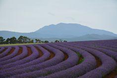 L1M1AP1 - Nikon D7100, Auto, ISO 160, f/8, 1/80, Auto WB. Landscape shot outdoors