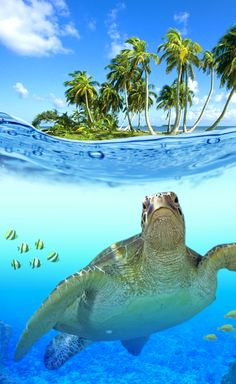 ♥ Sea turtle, palms, water