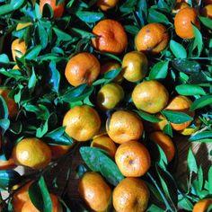 Mandarinas... | Flickr: Intercambio de fotos