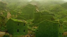 Ferns, weeds, and vines have completely covered this once bustling island town in China.