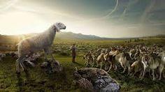 Ay de las victimas! Que los lobos reclamen la libertad se comprende, pero que los carneros les hagan coro...solo demuestra una cosa: que son carneros! (Ihering)
