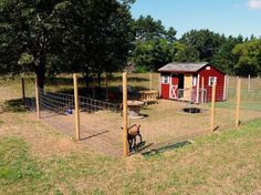 Why does it have to be so difficult Goat Shed, Goat Shelter, Sheep Shelter, Goat Care, Dwarf Goats, Raising Goats, Homestead Farm, Mini Farm, Goat Farming