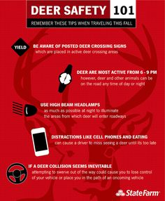 Deer Safety 101 : How to Avoid & Prevent Collisions #StateFarm