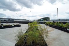 JetBlue's Airport Farm Adds a Touch of Green to Kennedy - The New York Times