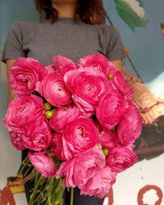 💕 Ranunculus Bouquet 💕 Lovely flower ...Lovely colour ❣  #flowershots #flowerlovers #flowers #ranunculus #fuchsia #colourlove #colours #love #hypericum #floristshop #gift #giftforher #bouquet #instalove #instamoment #thessaloniki #anthos_theartofflowers Ranunculus Bouquet, Thessaloniki, Fresh Flowers, Colours, Rose, Plants, Gifts, Pink, Presents