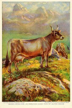Brown Swiss Cow by Edward Herert Miner, 1925.