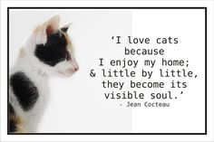 """""""I love #cats because I enjoy my home; and little by little, they become its visible soul."""" #JeanCocteau #pets"""