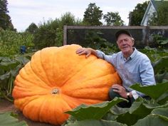 Growing gigantic pumpkins is a growing obsession these days.