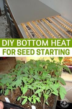 "DIY Bottom Heat for Seed Starting Retail bottom heat is expensive – I saw one ""kit"" at a local garden center that was big enough for 2 flats and was $79 – wow! You can buy a lot of tomato plants for eighty bucks! #garden #gardening #gardeningtips #homestead #homesteading"