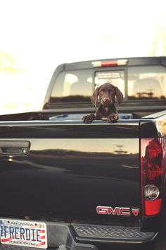 Pup in a truck