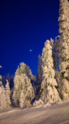 Moon and the Magical trees #Ruka #Finland
