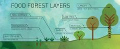 Food Forest aka Forest Garden layers | Duvall Homestead