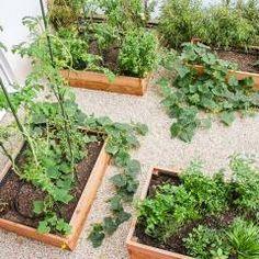 Hochbeete für Gemüse/Obst: mediterraner Garten von Kräftner Landschaftsarchitektur