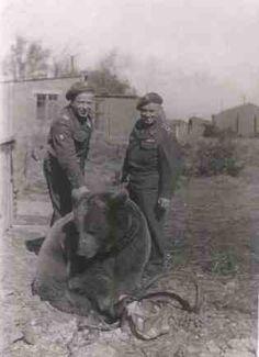 @ Winfield, Scotland Wojtek Bear, Animal Heros, George Santayana, Retro, World War Two, Brown Bears, Wwii, Vintage Photos, Black And White