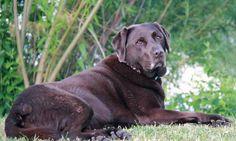 Unser Hunde Blog Husse. Die Blogseite über den treuen Vierbeiner wird Ihnen bereitgestellt von Husse Deutschland. Gesundes Hundefutter. Frei Haus Lieferung.