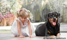 Preventing Dog Bites: How Safe is Your Child Around Dogs? http://ow.ly/9FmbV