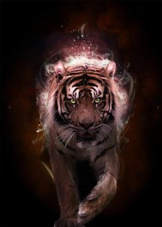 "Tiger totem - FIERCE, POWERFUL, PROTECTIVE, PASSION, ENTHUSIASM. The tiger is considered to be the king of all beasts and has an extremely powerful energy. The Chinese Zodiac Signs: The Tiger. The mantra of the tiger is: ""MY COURAGE STRENGTHENS MY PATH."""
