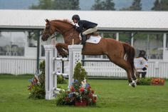 An Explanation of Jumper Course Formats - The Plaid Horse Magazine Horse Magazine, Go Ride, Show Jumping, Jumper, Horses, English Riding, Plaid, Horse Stuff, Animals