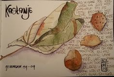 I found some chestnuts and leaves a few weeks ago. I didn't get to sketching them until now. The leaf dried en git even more fun to draw.