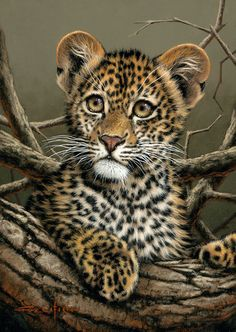 Cría de leopardo.