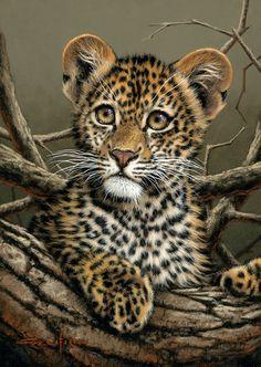 baby cheetah cub ✿⊱╮