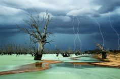 """AUSTRALIA: Menindee Lake in New South Wales. The photo, titled """"Graveyard,"""" won several awards and was even a finalist in National Geographic's 2013 Nature Awards."""