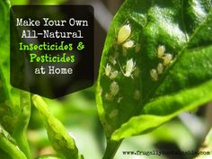 In the Garden: How to Make Your Own Homemade Organic Insecticides and Pesticides ~ I want to try the basic recipe........1 1/2 tsp liquid soap to 1 qt. of water, optional: 1/4 cup of isopropyl alcholol.