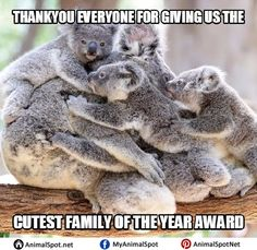 so much love! - Koala Funny - Funny Koala meme - - so much love! Koala Funny Funny Koala meme so much love! More The post so much love! appeared first on Gag Dad. The post so much love! appeared first on Gag Dad. Cute Wild Animals, Cute Little Animals, Cute Funny Animals, Animals Beautiful, Animals And Pets, Nature Animals, Mundo Animal, My Animal, Funny Koala