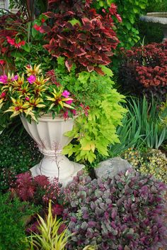 GardenBook: Container Mania in New Hampshire