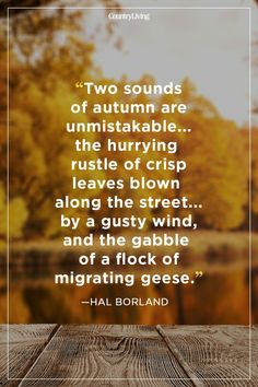 You'll want to read these fabulous fall quotes that sum up the way we feel about fall. These festive sayings about autumn will remind you of all the beauty the season has to offer from September through November. Fall Season Quotes, Fall Quotes, Fall Sayings, Mabon, Life Quotes Love, Best Quotes, Time Quotes, Short Quotes, Wisdom Quotes