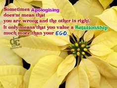 Sometimes apologizing doesn't mean you are wrong