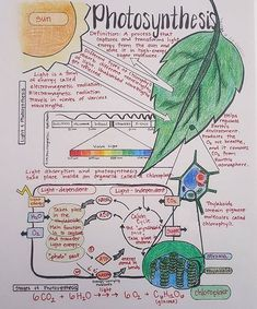 Ideas For Science Notes College Ap Biology Gcse Biology Revision, Science Revision, Study Biology, Gcse Science, Biology Lessons, Science Notes, Science Biology, Teaching Biology, Biology Teacher