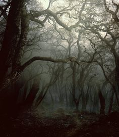 Creepy. I'm thinking of the forest above Serenity before we destroyed the evil temple that was blighting the land.