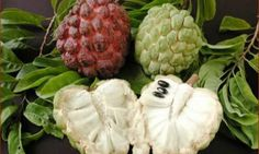 Did you know that the extract from a fruit can keep the rogue cells of twelve different types of cancer in check? According to media, the graviola fruit, also known as guanabana, guyabano, or sours…