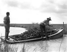 Vintage photo Louisiana oystermen.  Photo by an amazing artist , Theodore Fonville Winans.  Some of the finest pictures of rural and south Louisiana that I have ever seen.
